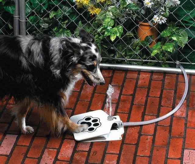 297393929 3dc9e68b0f041 Fantastic Gadgets For Your Pets