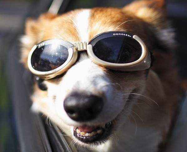 Original+Dog+Lenses+Doggles