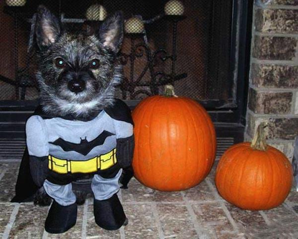Halloween+Dog+Costume