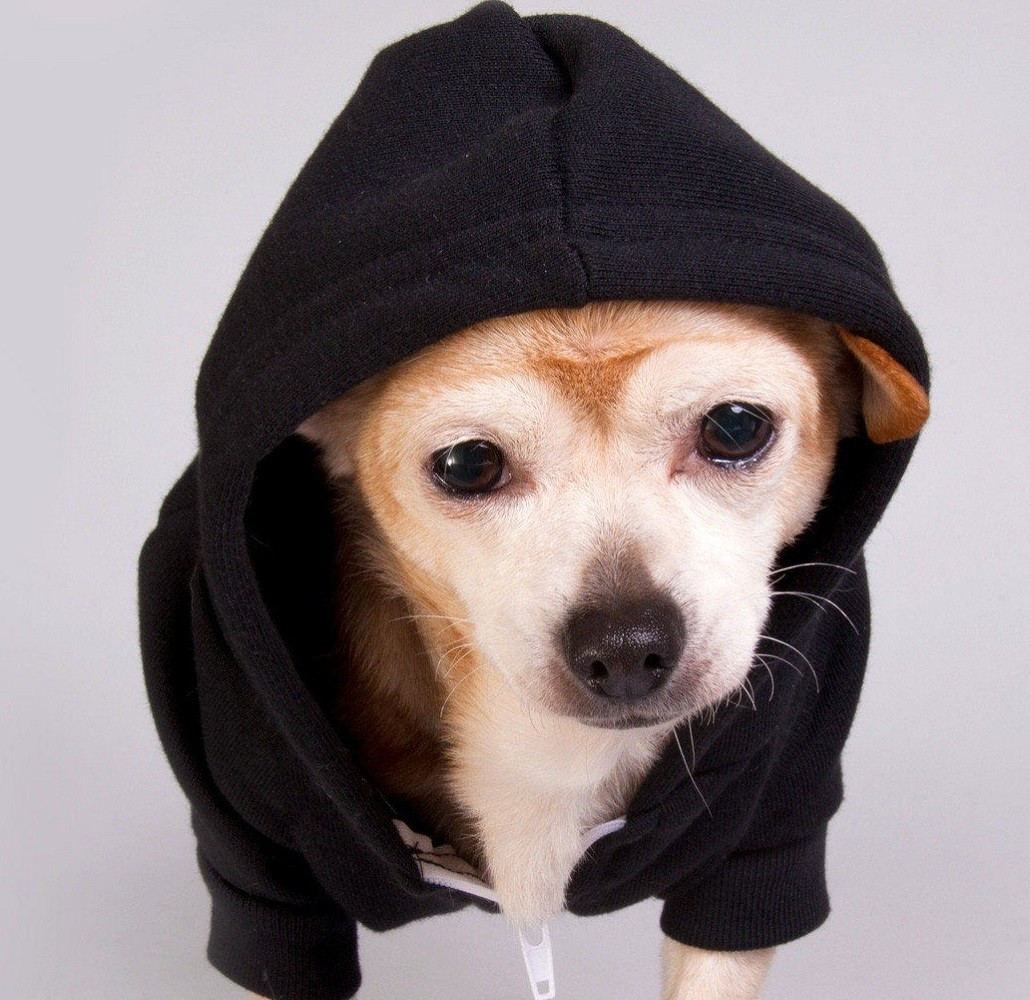 Flex+Fleece+Dog+Zip+Hoody+By+American+Apparel