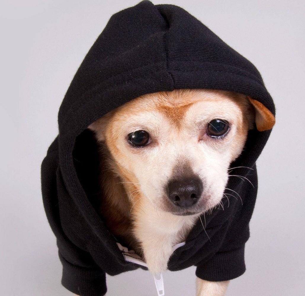 Flex Fleece Dog Zip Hoody by American Apparel