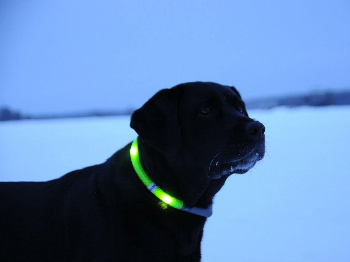 Glowdoggie LED Collars
