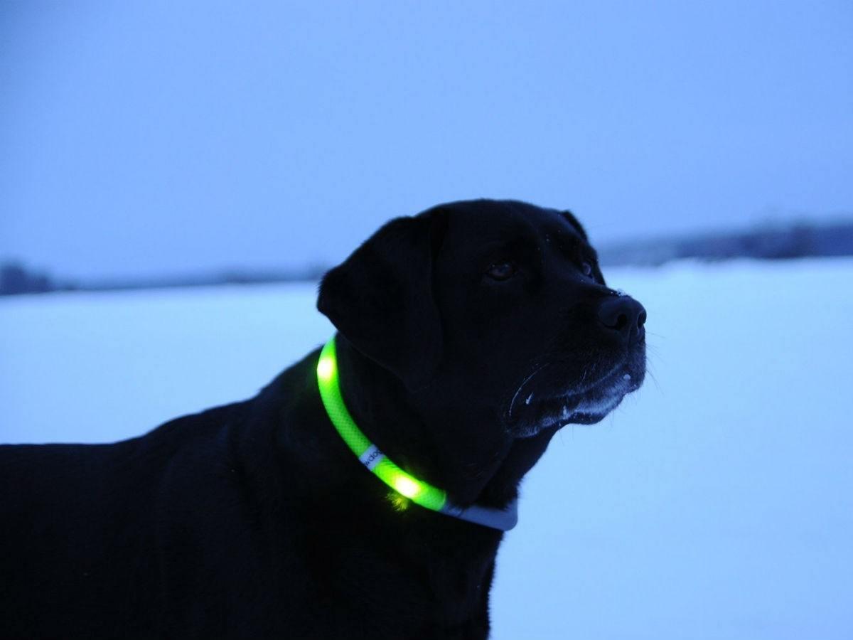 Glowdoggie LED Collars