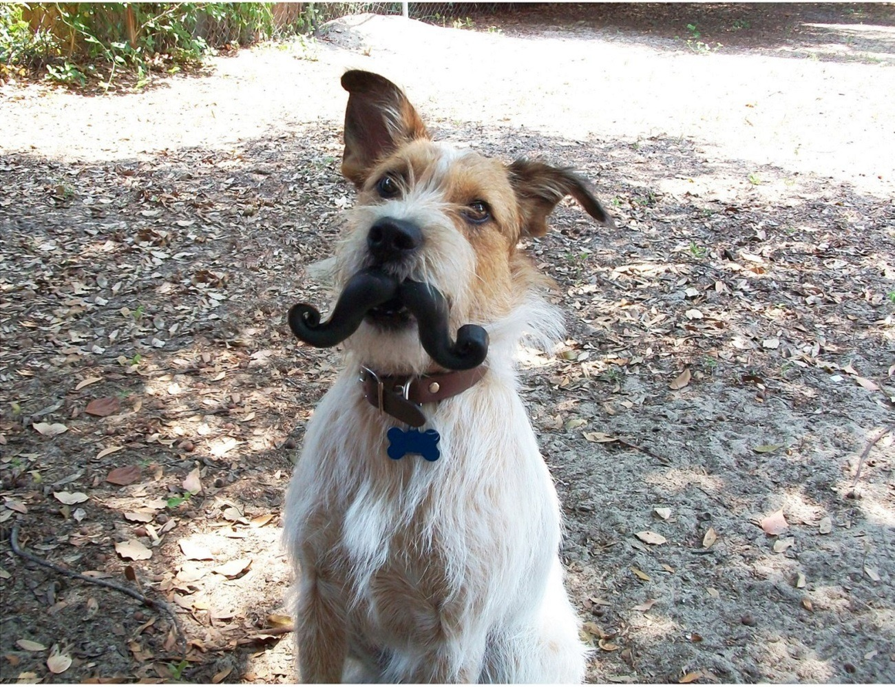 Humunga Stache Durable Dog Toy