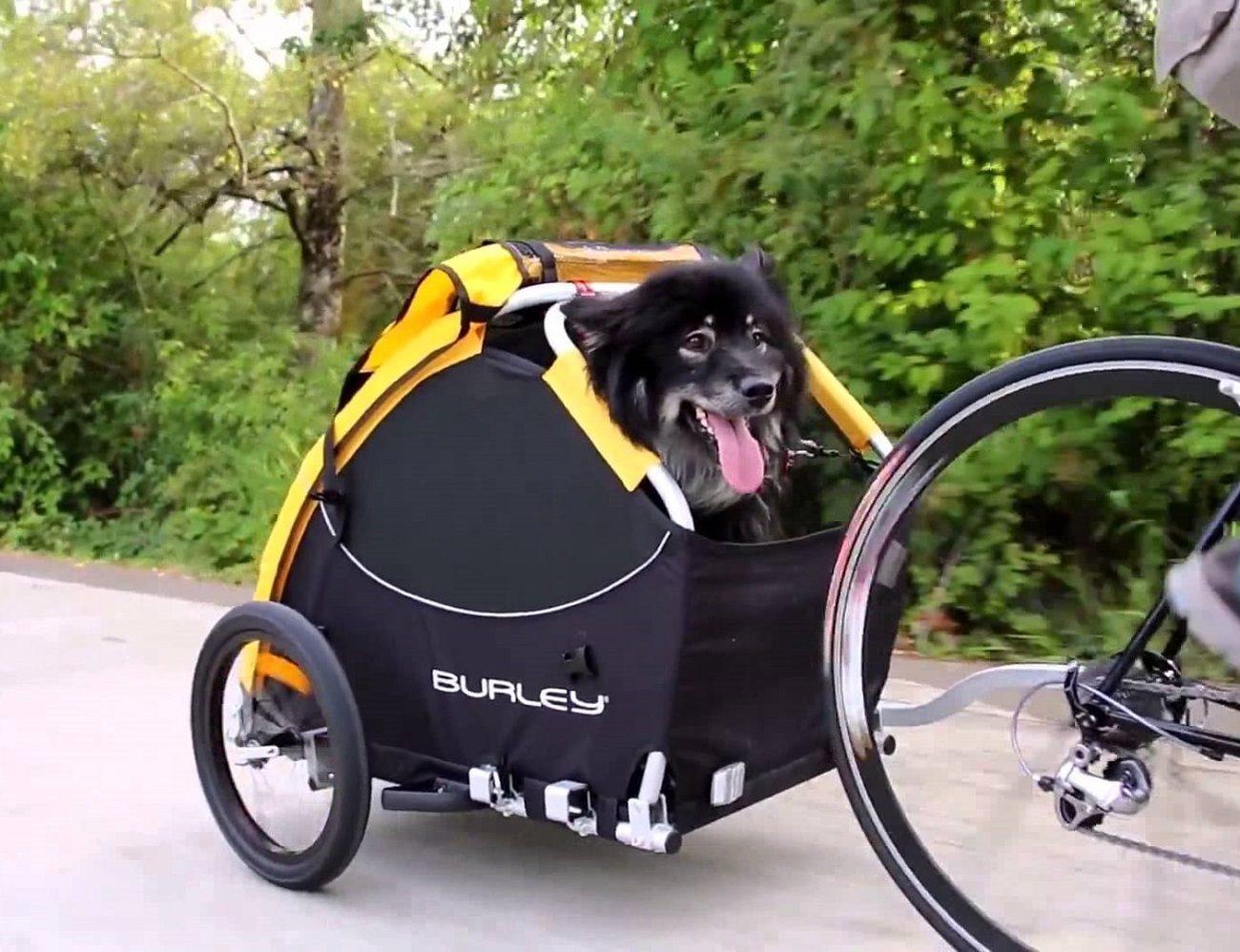 Burley Tail Wagon Pet Bike Trailer Stroller » Gadget Flow
