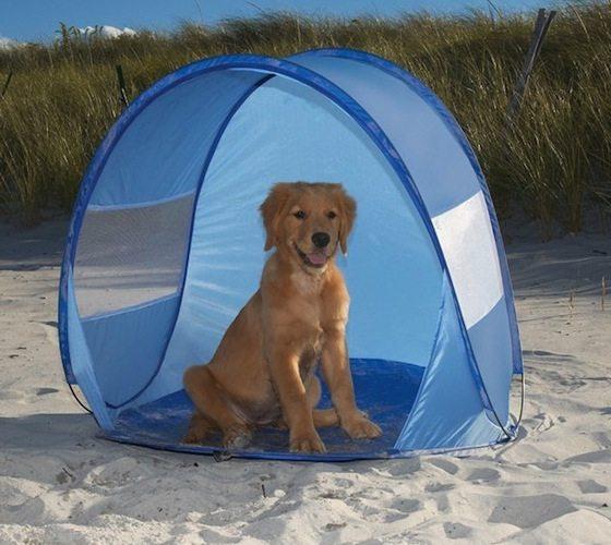 Dog Beach Cabana