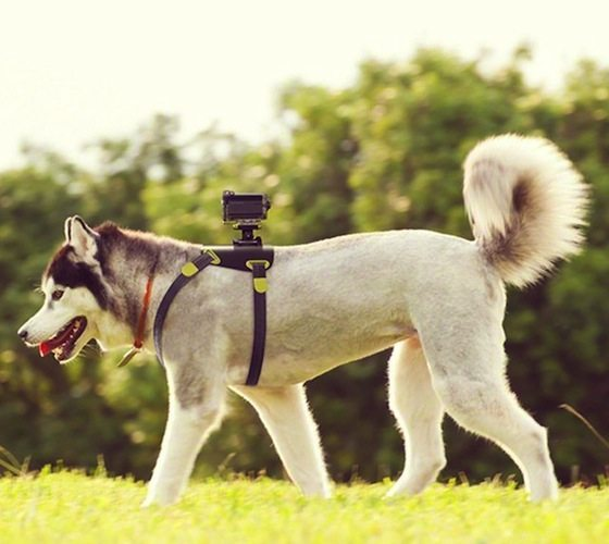 Action+Cam+Dog+Mount