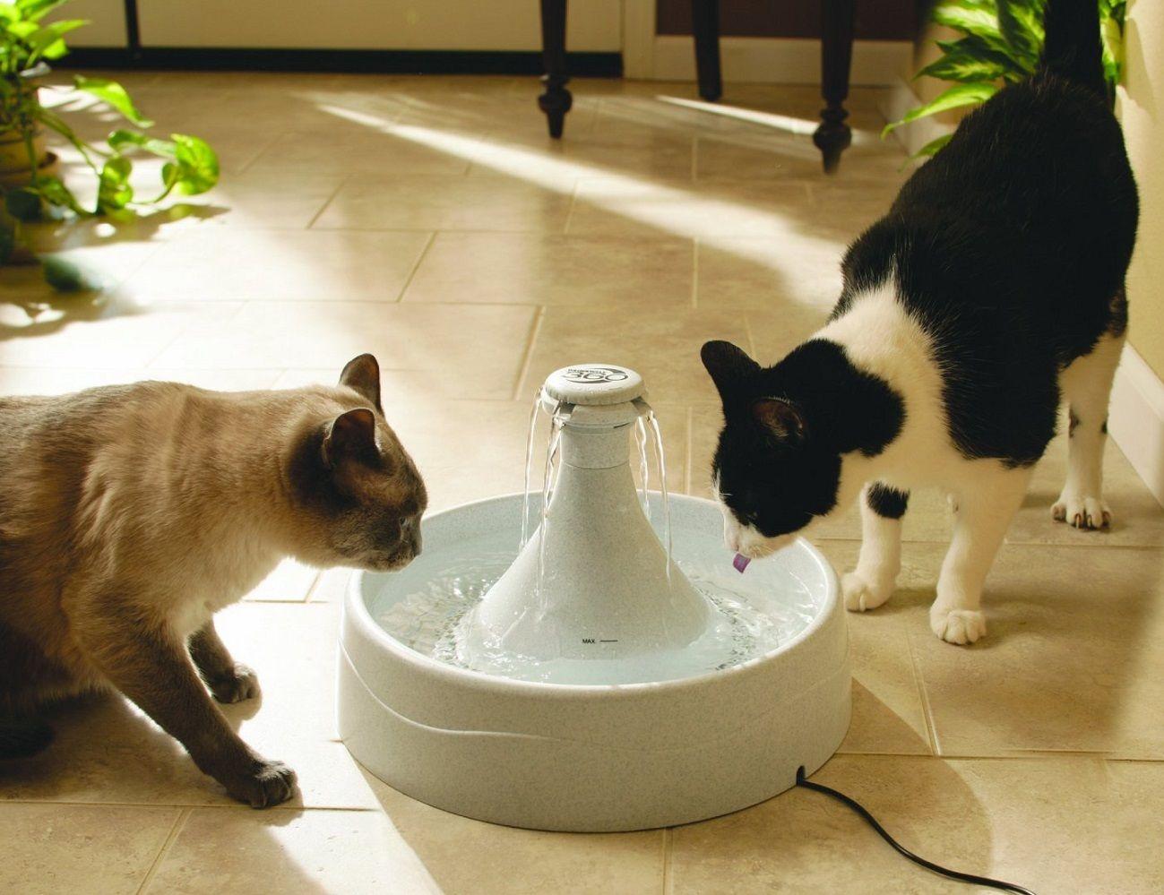 Автопоилка для кошки своими руками - Секрет Мастера 67