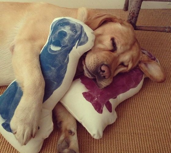 fauna-labrador-pillow