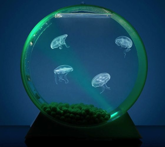 Jellyfish Aquarium For Your Home