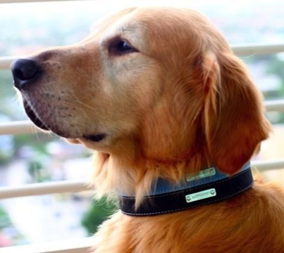 Dog Collars by Legitimutt