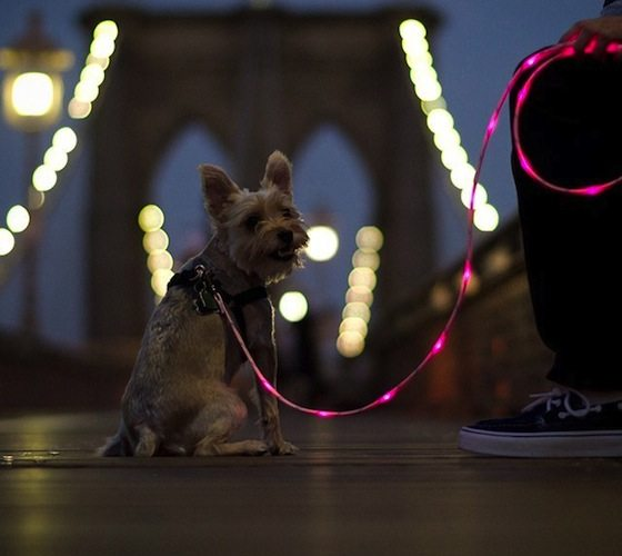 Illuminated+Dog+Leash