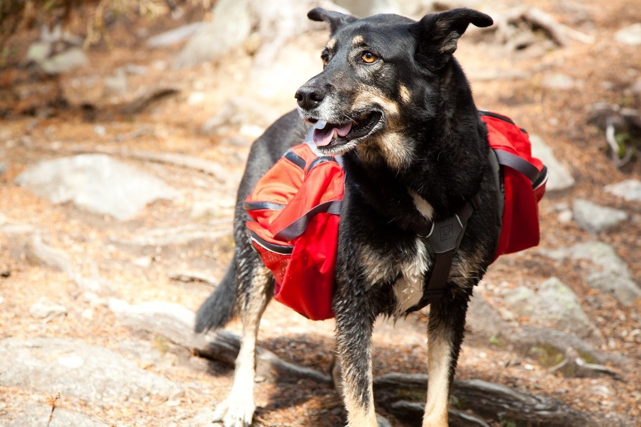Ruffwear Dog Packs