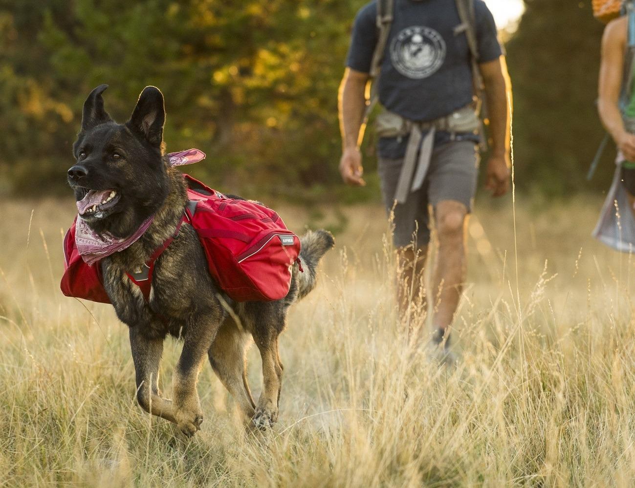 Ruffwear Dog Packs