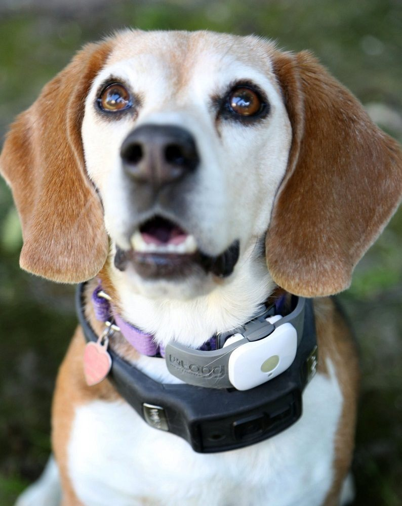 Tagg GPS Pet Tracker - Dog and Cat Collar Attachment ...