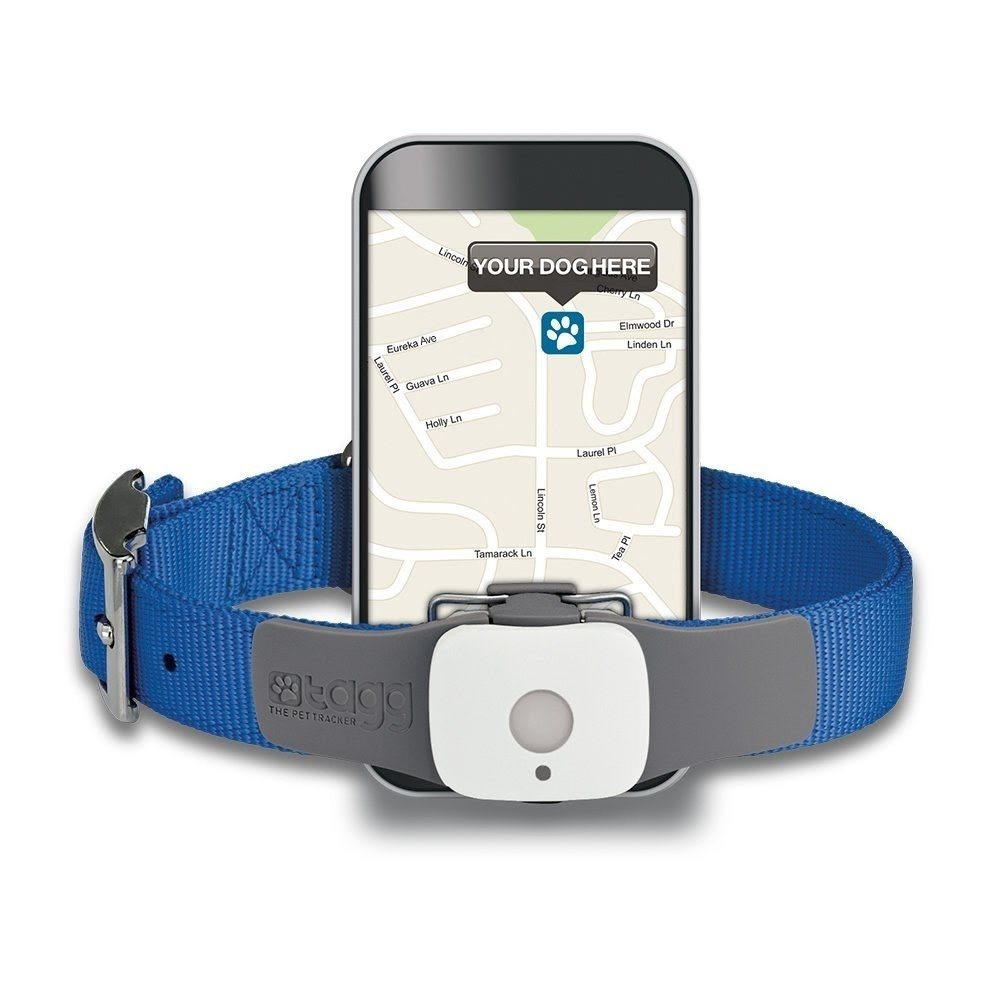 Tagg GPS Pet Tracker – Dog and Cat Collar Attachment