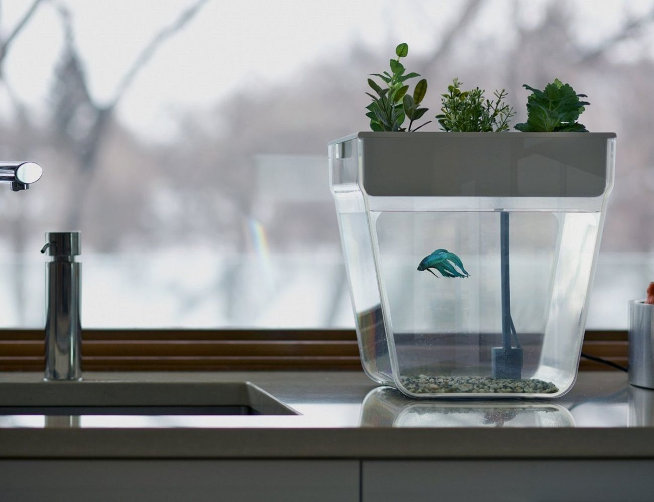 Aqua+Farm+By+Back+To+The+Roots