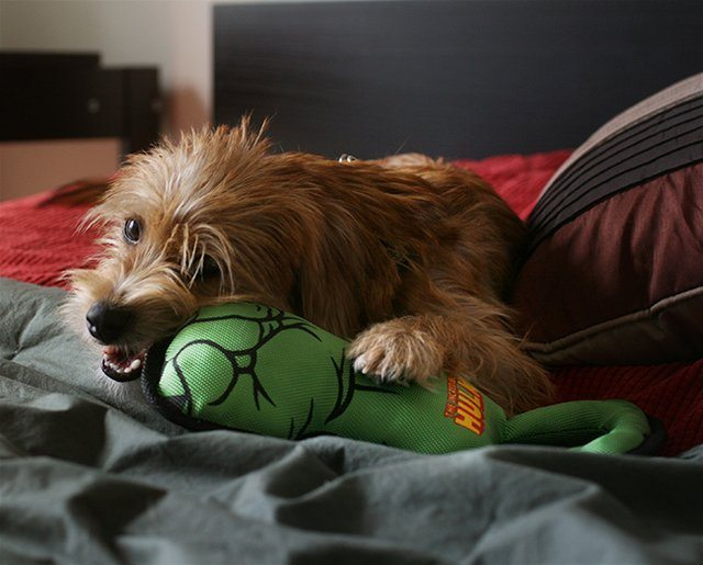Hulk+Fist+Pull+Toy+For+Dogs