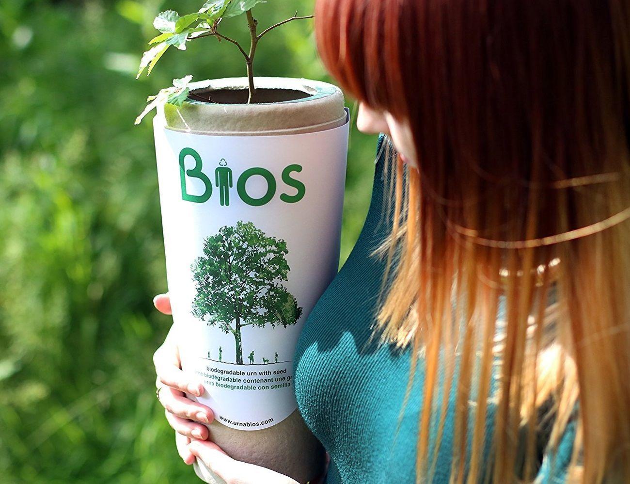 Bios Biodegradable Urn