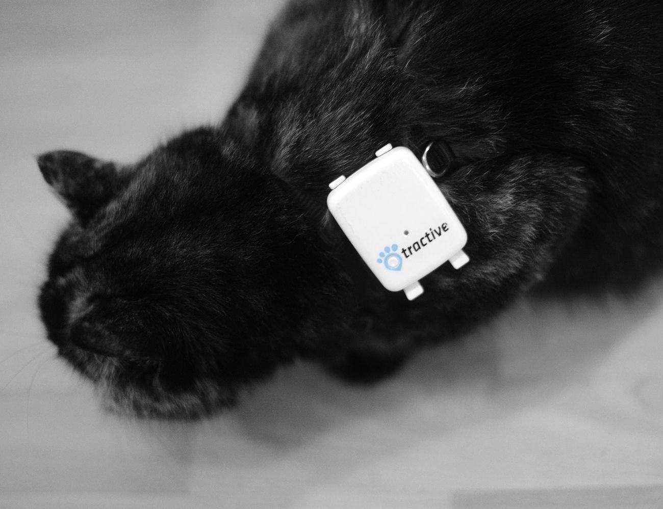 Pet Remote