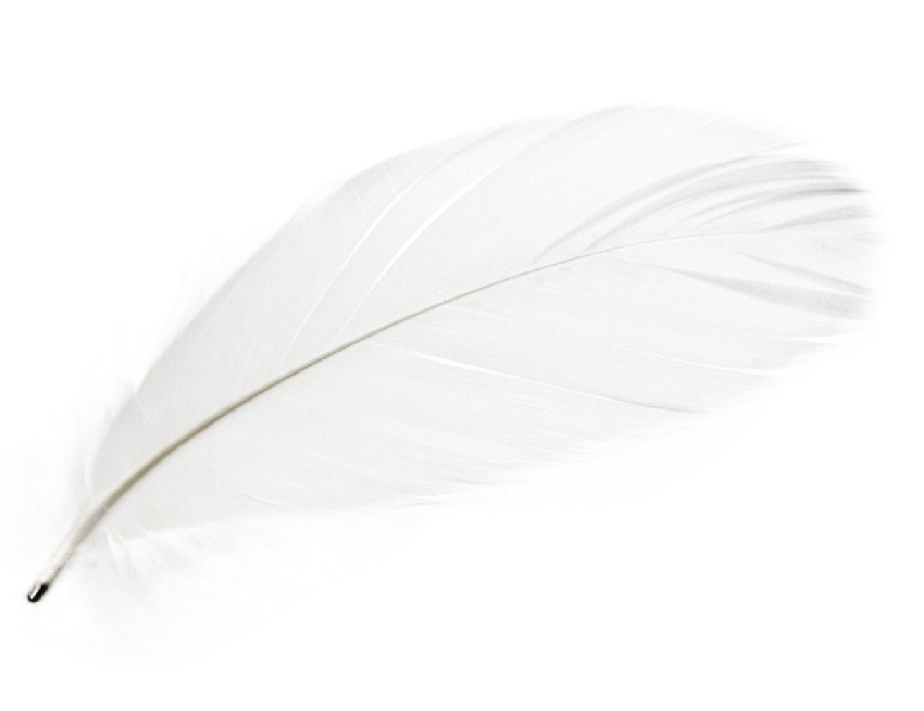 Magic Magnetic Feathers From Mineheart