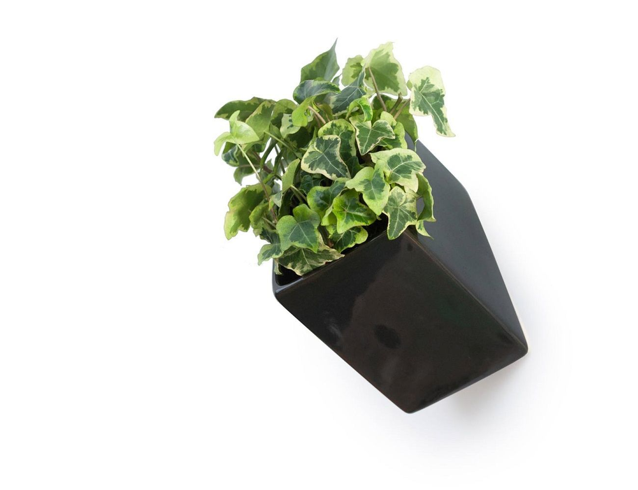 Off The Wall Planter