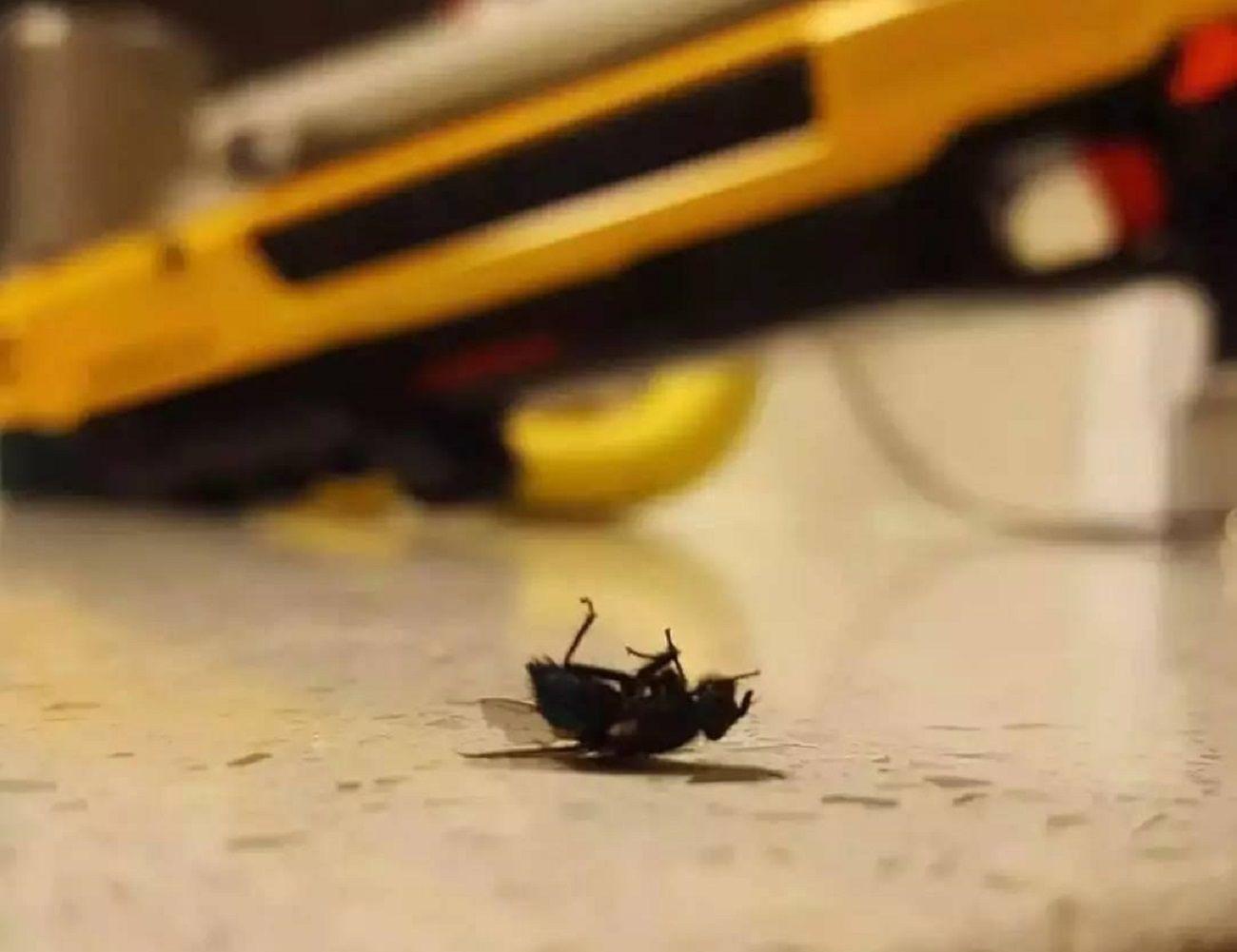 The Bug-A-Salt Fly Killer