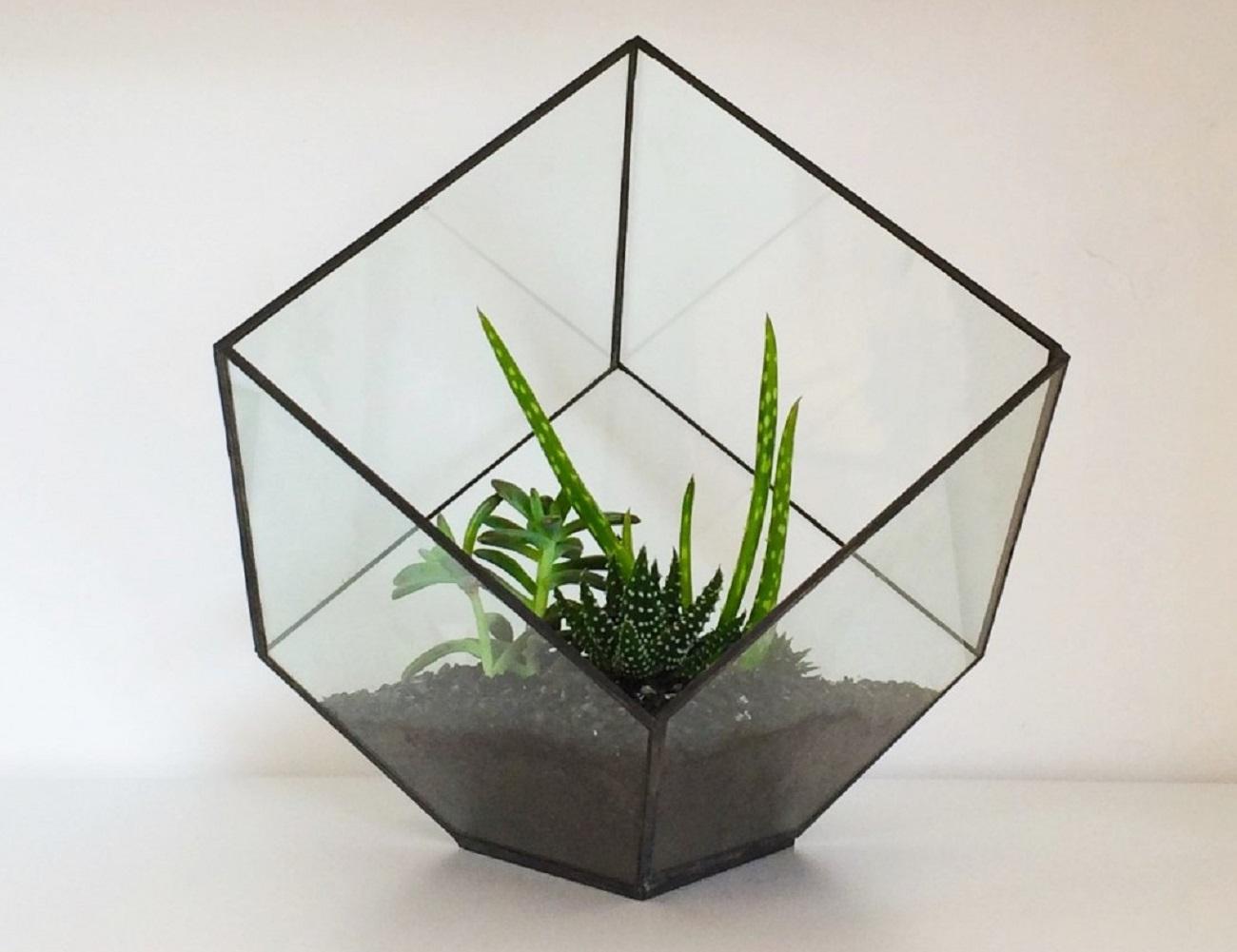Cube+Terrarium