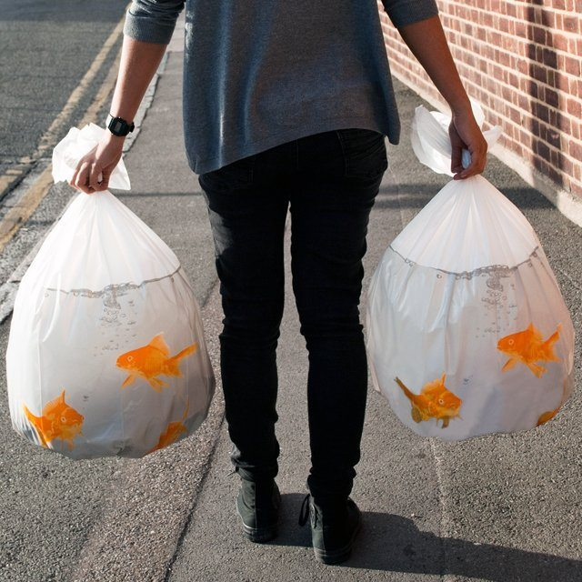 Goldfish+Bin+Bags