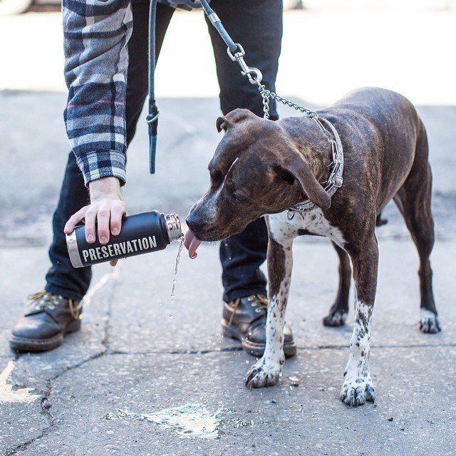 Izola Preservation Water Bottle