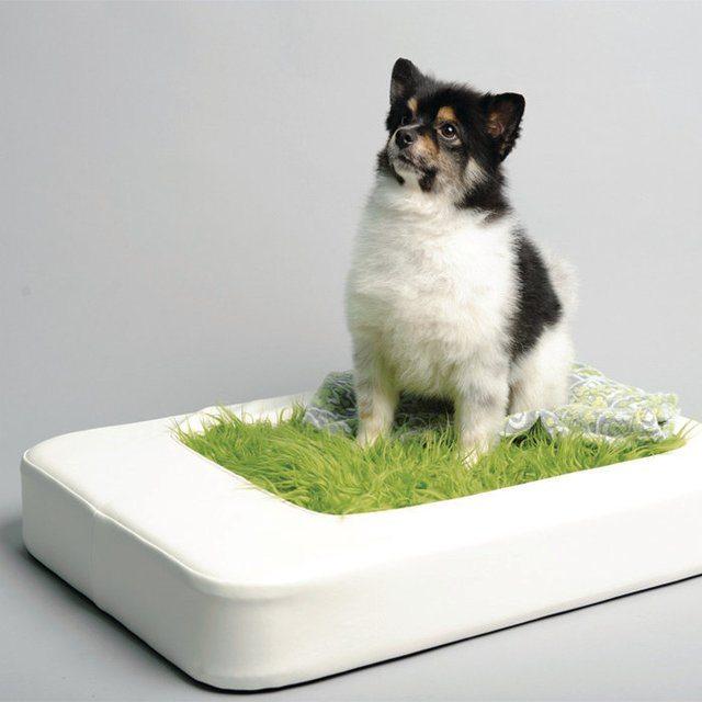 Nesto+Pet+Bed+W%2F+Faux+Fur+Mattress