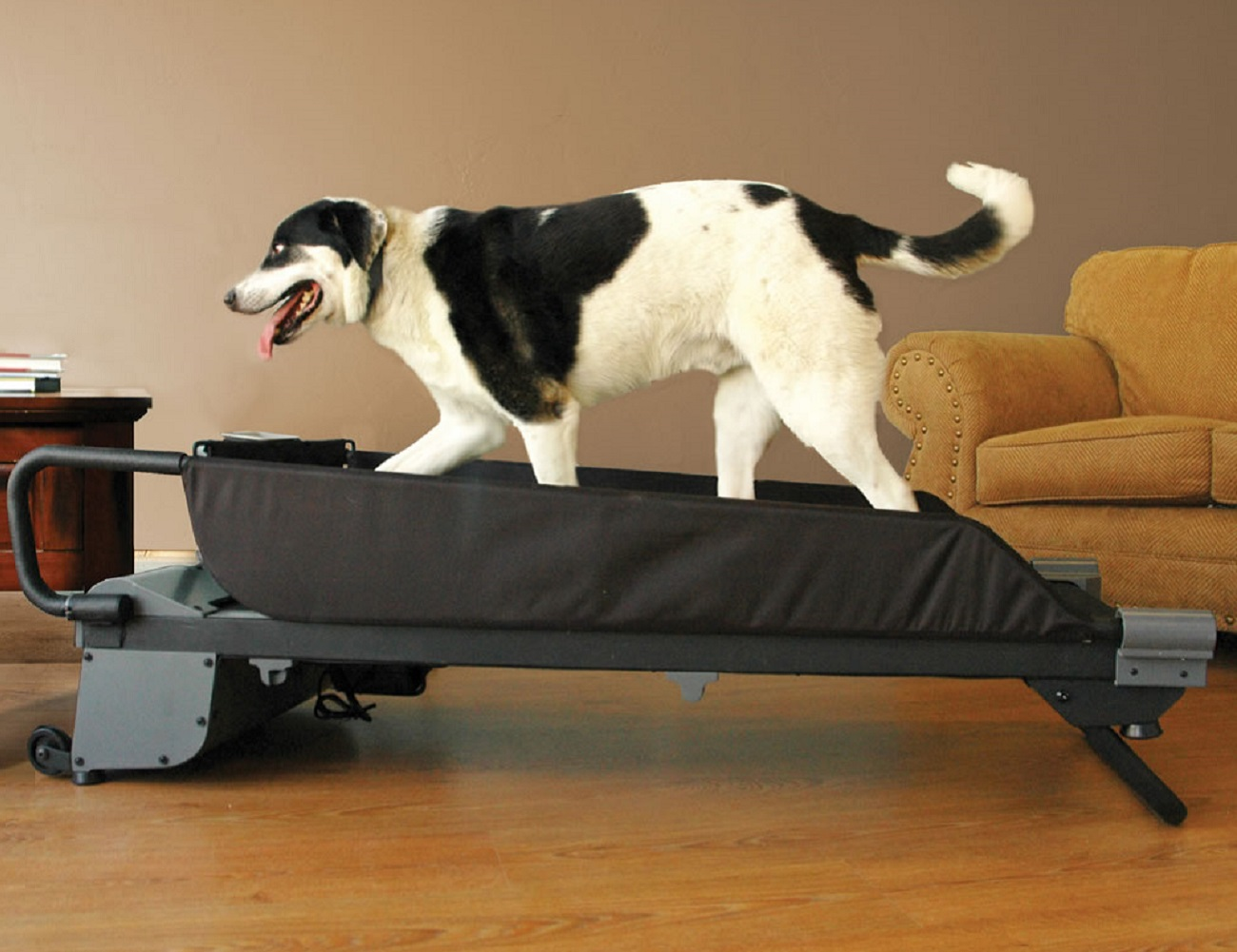 PetZen+DogTread+Dog+Treadmill