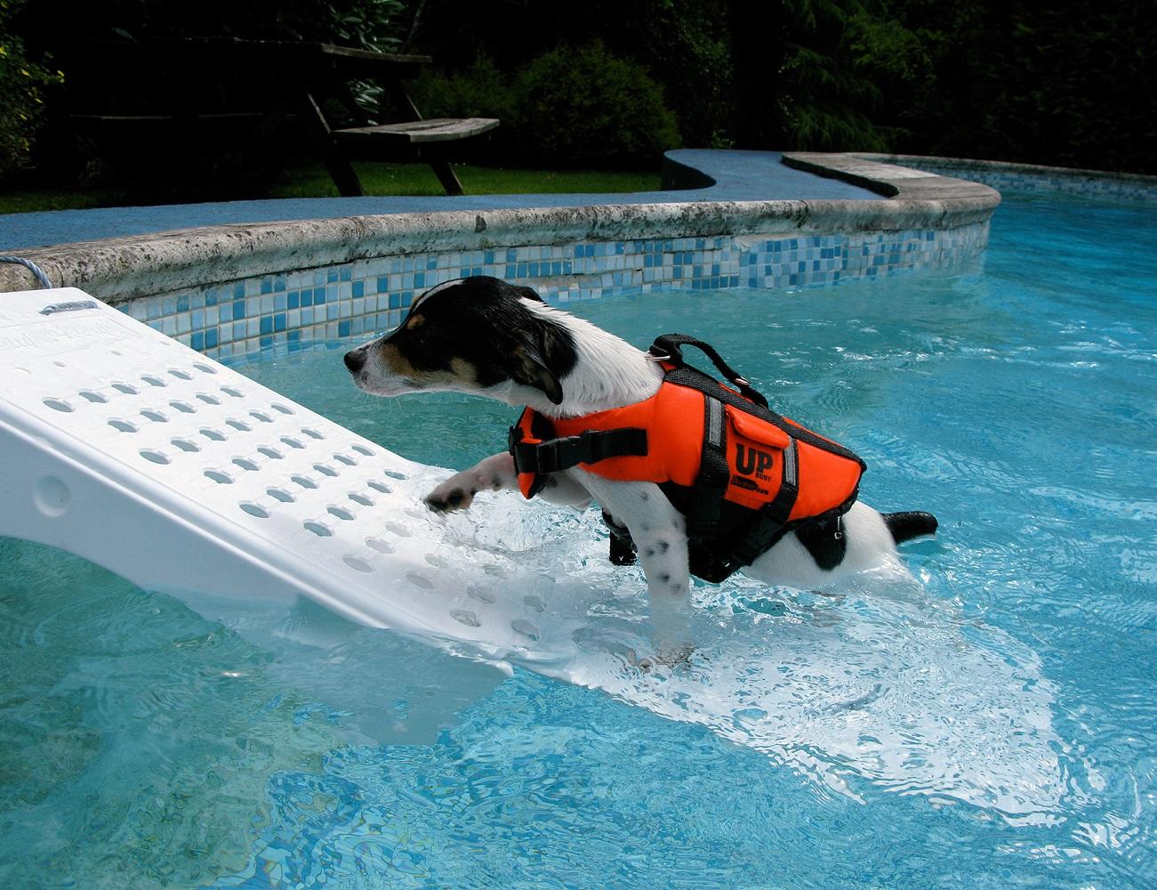 Skamper Pet Pool Escape Ramp