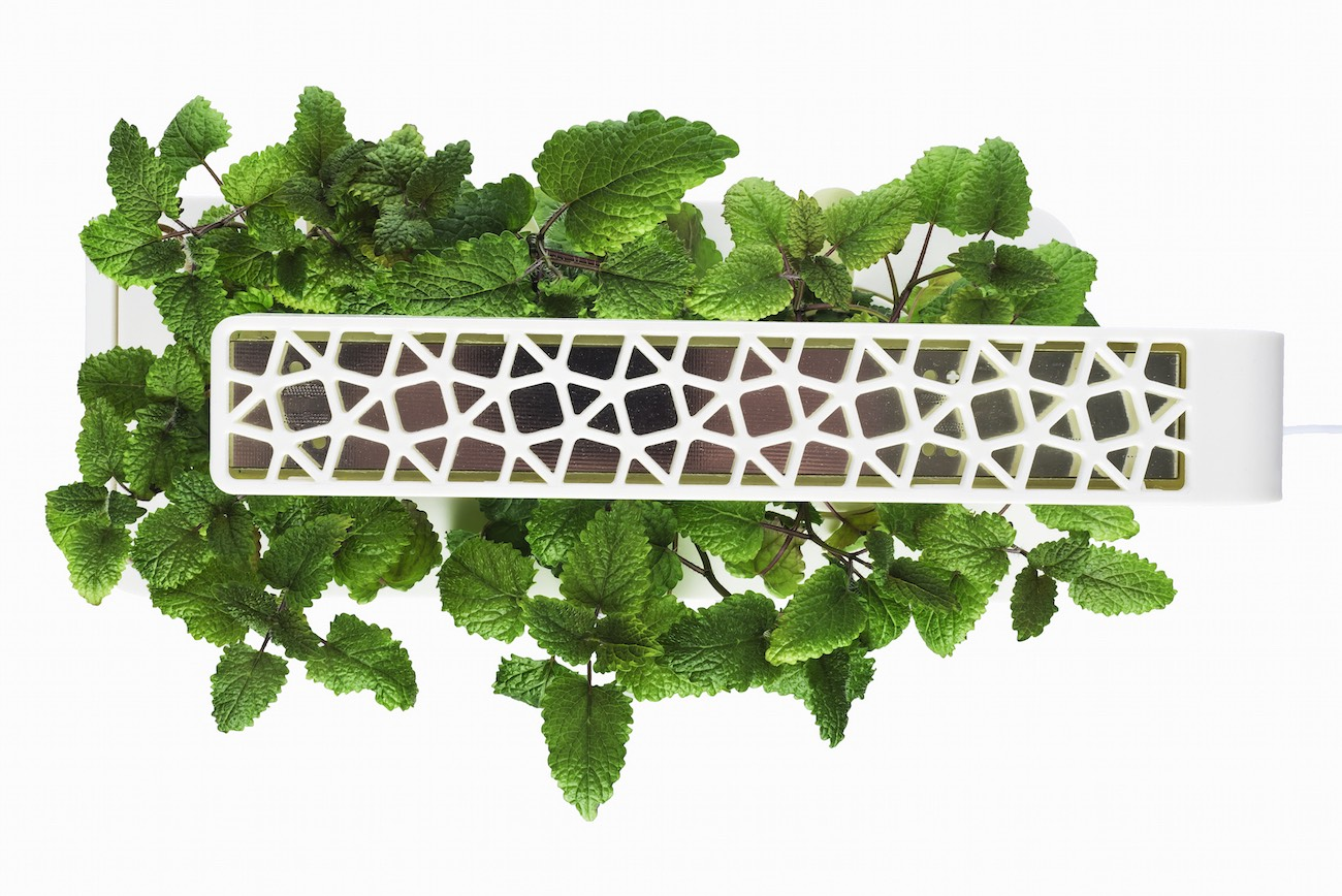 How To Get Plants To Grow Up A Wall Naturally