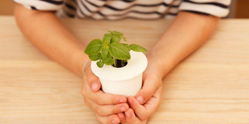 Smart Herb Garden refill cartridge