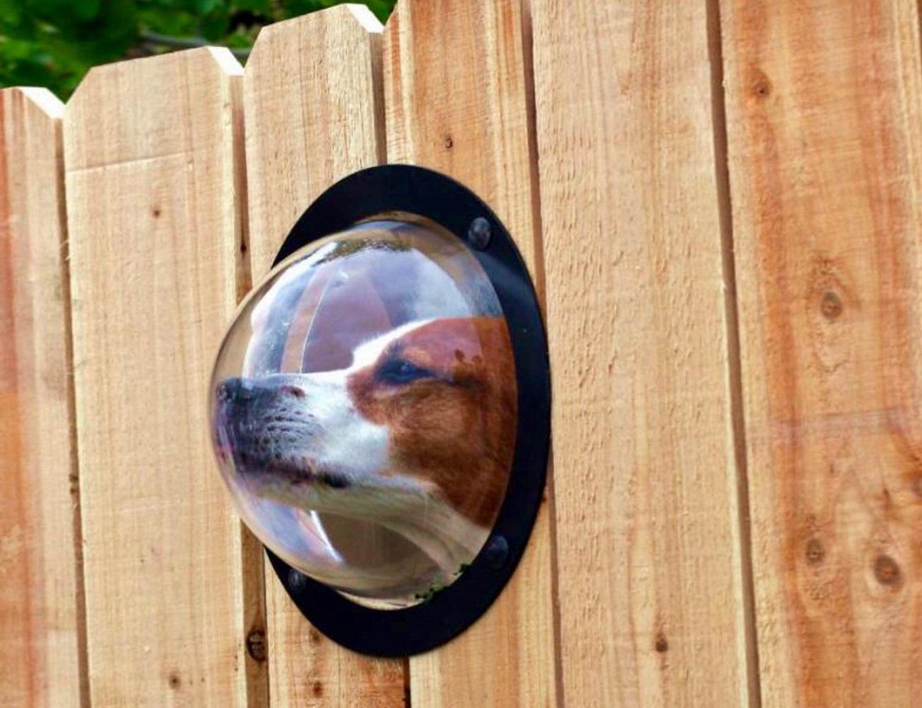 Pet Peek Dog Window