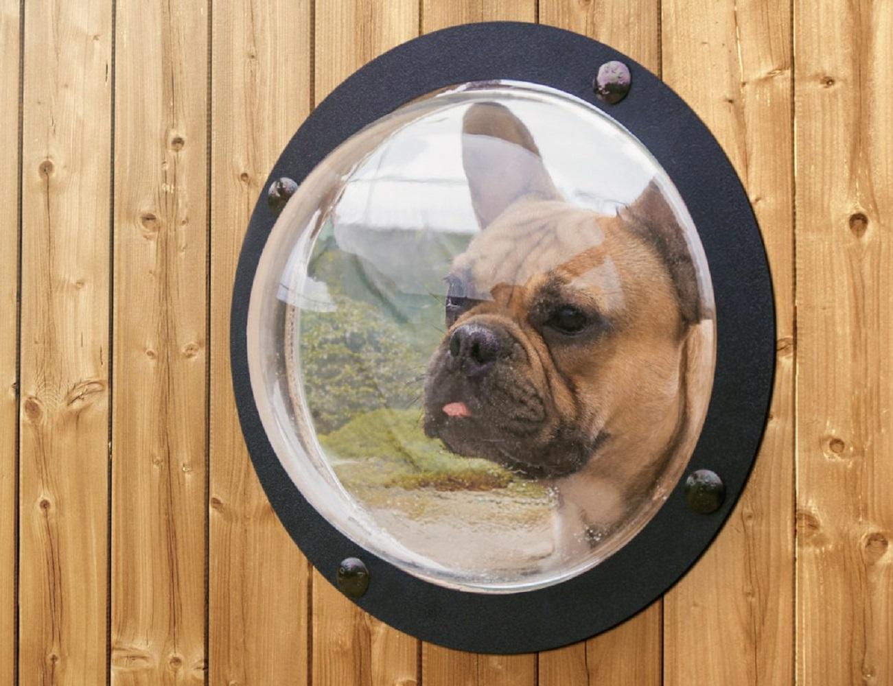Pet Peek Dog Window 187 Gadget Flow