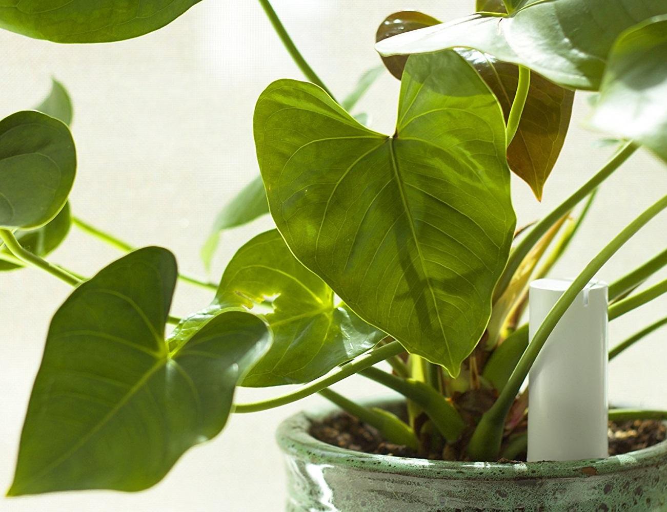 PlantLink Wireless Plant Sensor
