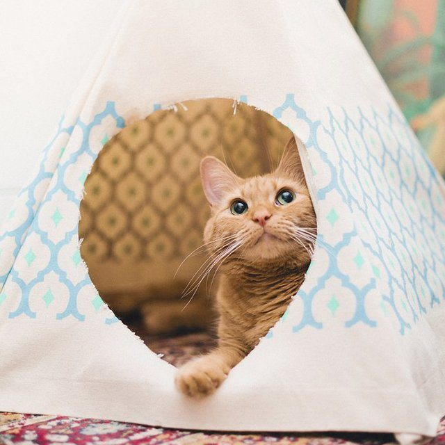 Royal+Printed+Cat+Teepee