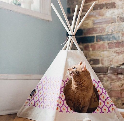 Royal Printed Cat Teepee