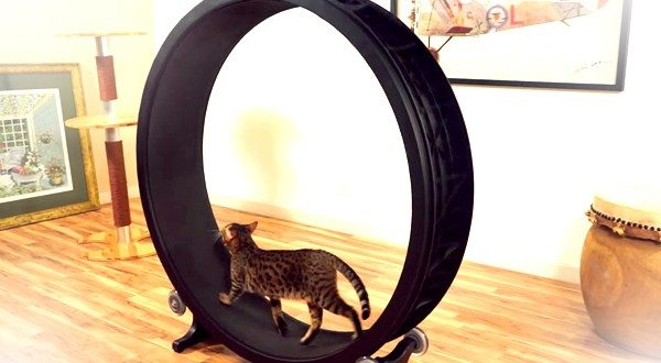 "Your Feline Friend Will Be ""One Fast Cat"" With This Hamster Wheel…For Cats"