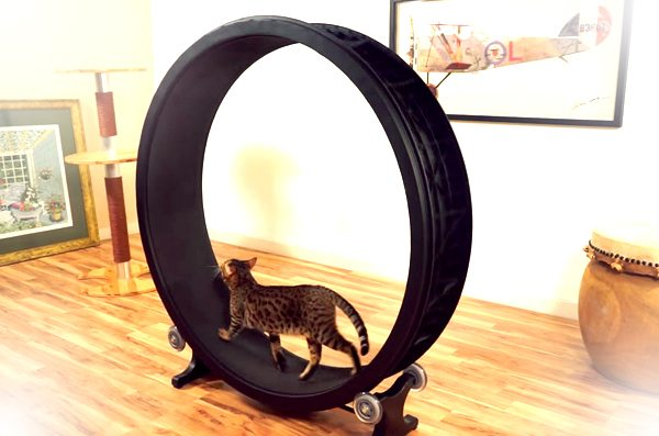 """Your Feline Friend Will Be """"One Fast Cat"""" With This"""