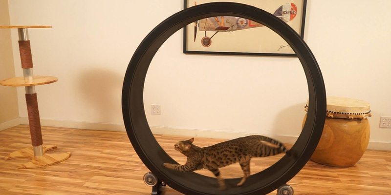 One fast cat hamster wheel