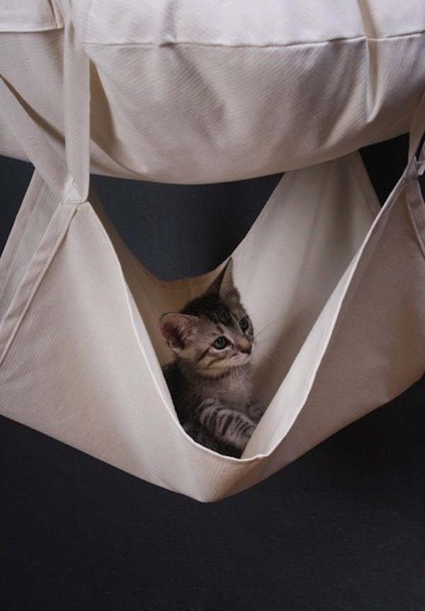 Cat's Trapeze Hammock