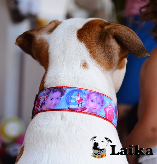 design-your-own-dog-collar-02