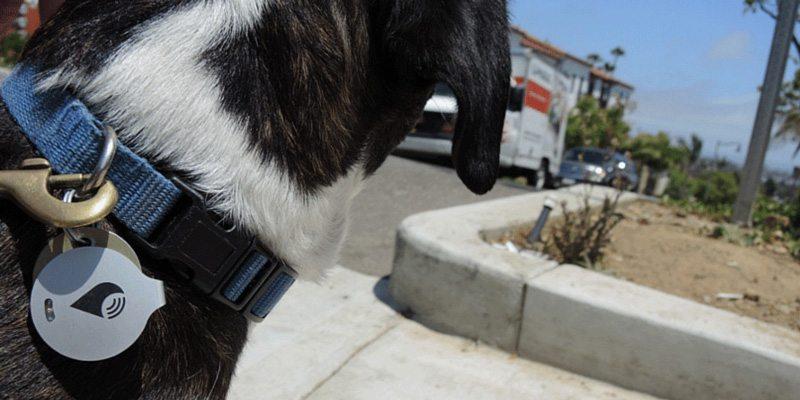 TrackR bravo pet collar attachment