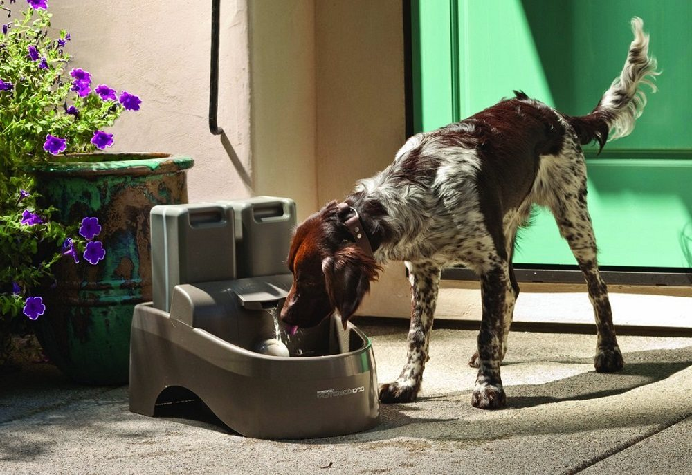 Drinkwell Indoor Outdoor Dog Fountain