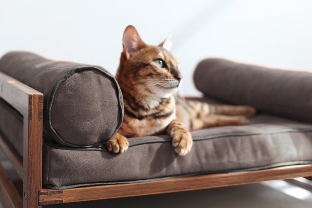 the-aldo-lounger-for-pets-02