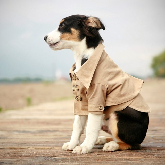 Westerly+Trench+By+Rover