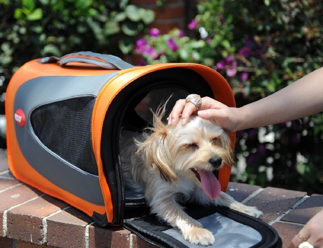 Argo Petascope Pet Carrier